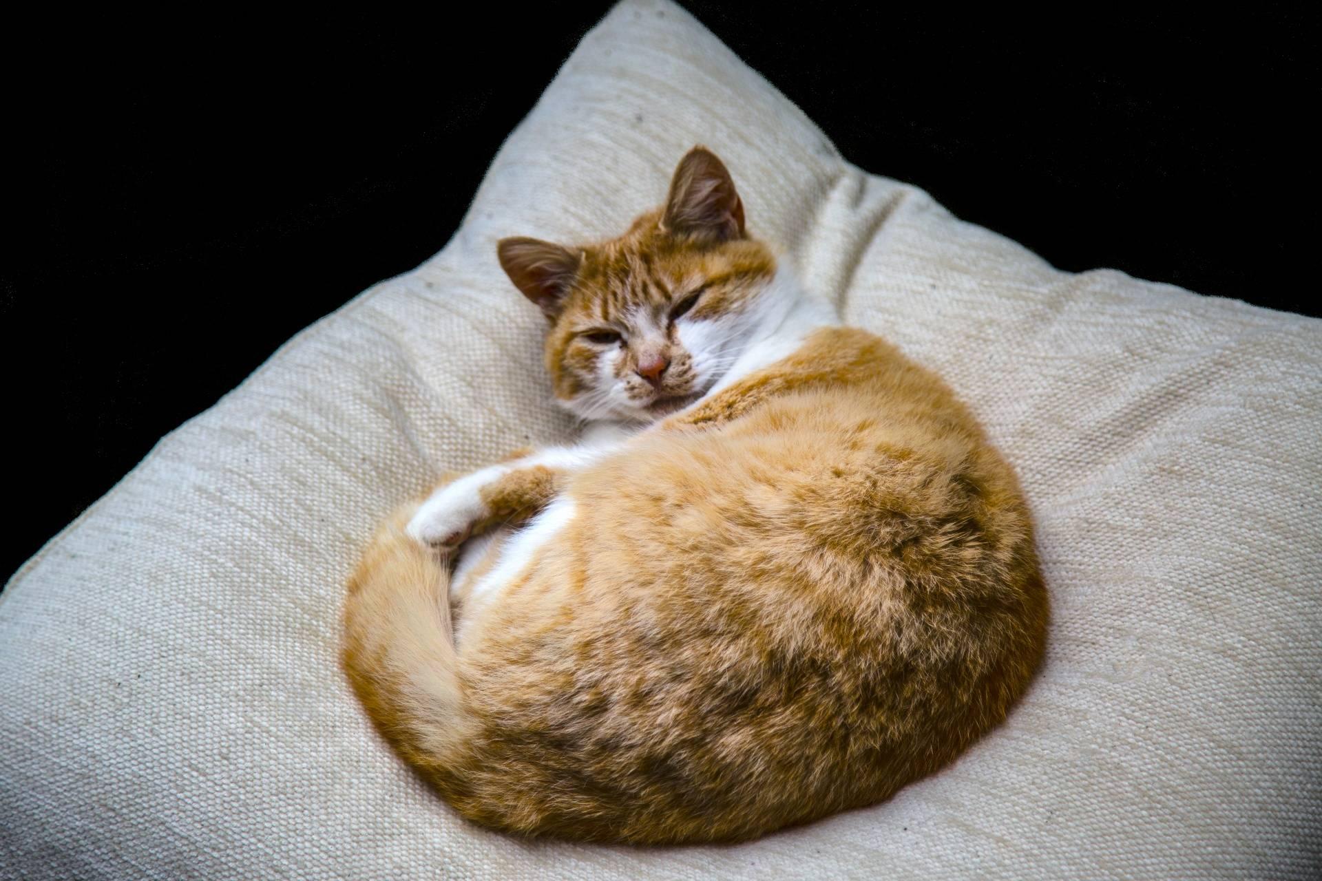 Кот спит на кровати или столе: что говорят приметы, можно ли кошке лежать в постели хозяев?