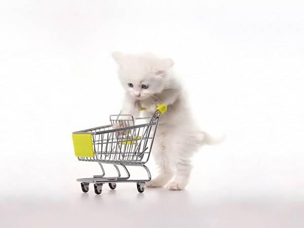 Как дрессировать кошку в домашних условиях - полезные советы для начинающих