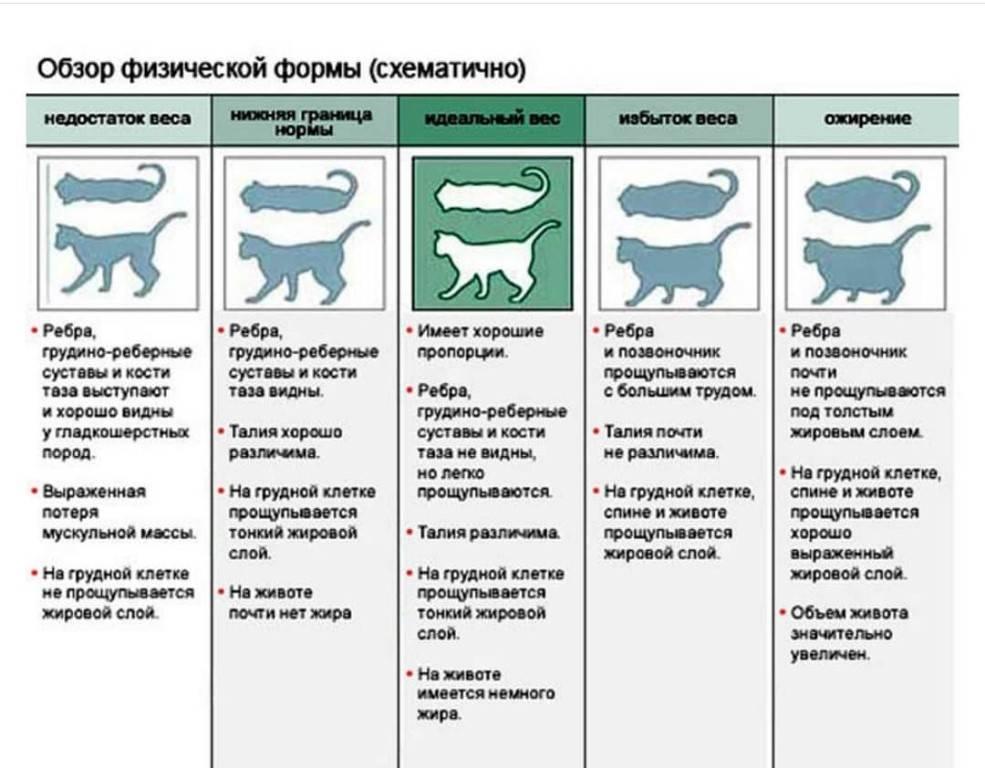 Как понять, что кошка родила всех котят | как узнать