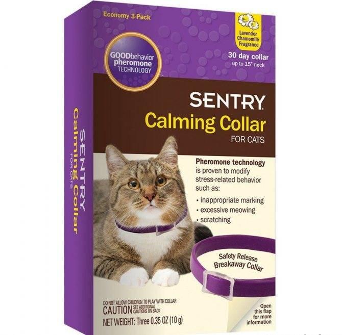 Какое успокоительное дать коту перед стрижкой