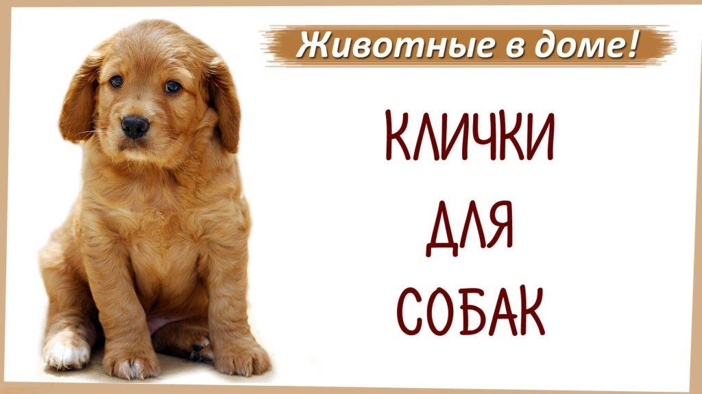 Редкие имена для собак, красивые и редкие клички для щенков мальчиков и девочек.