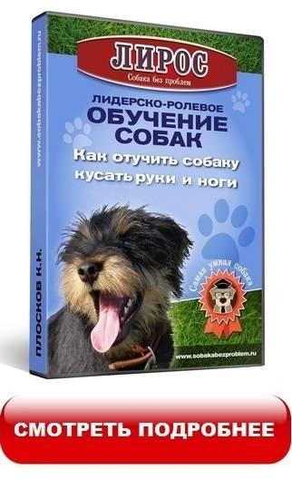 Как отучить собаку кусаться: за руки, за ноги, во время игры и от радости