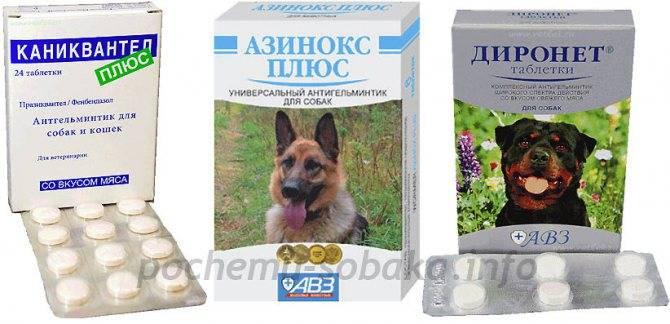 Итраконазол для собак, кошек, животных | инструкция по применению интраконазола в ветеринарии