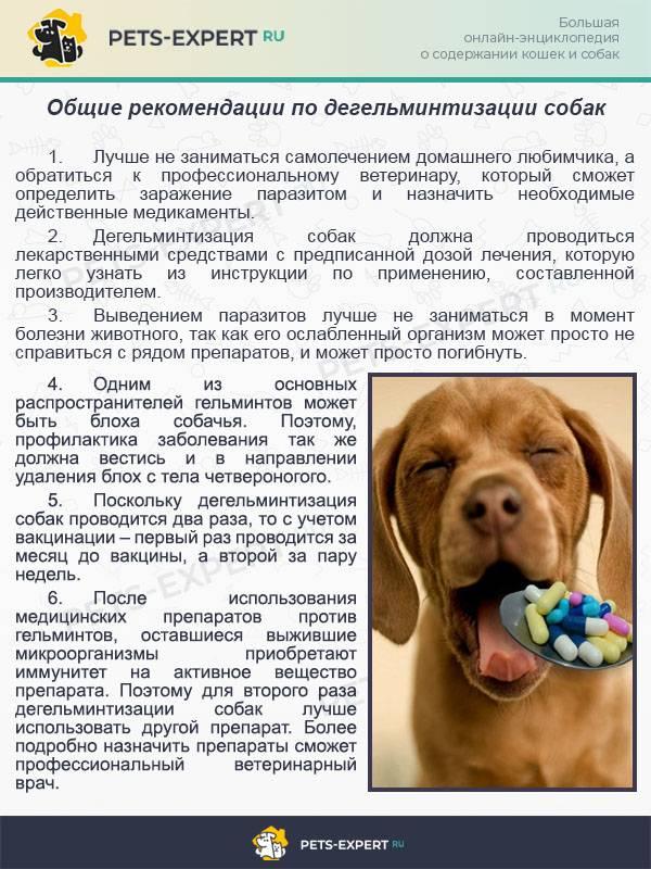 Чем лечить белые глисты у собак: таблица препаратов, дозировка, профилактика