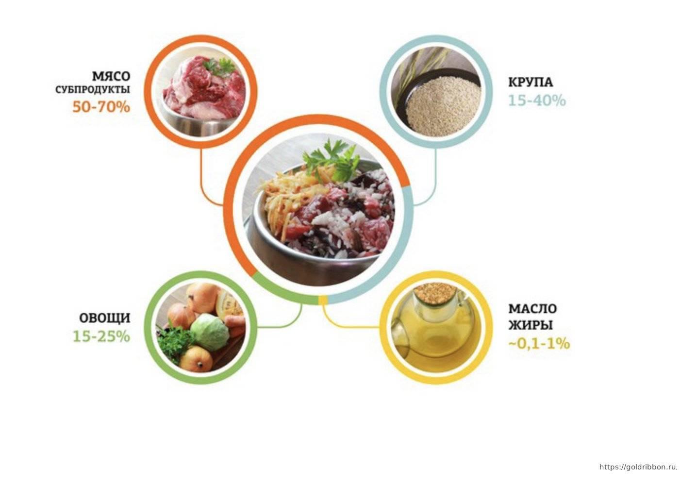 Чем лучше кормить самоеда: натуральная пища или искусственные корма + примерное меню на неделю