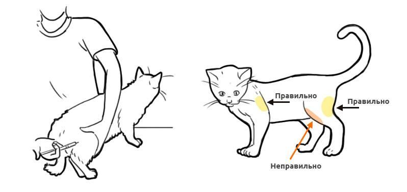 Где находится холка у кошек: важная информация о строении и назначении