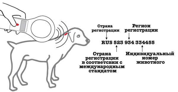 Чипирование собак - советы, секреты, рекомендации