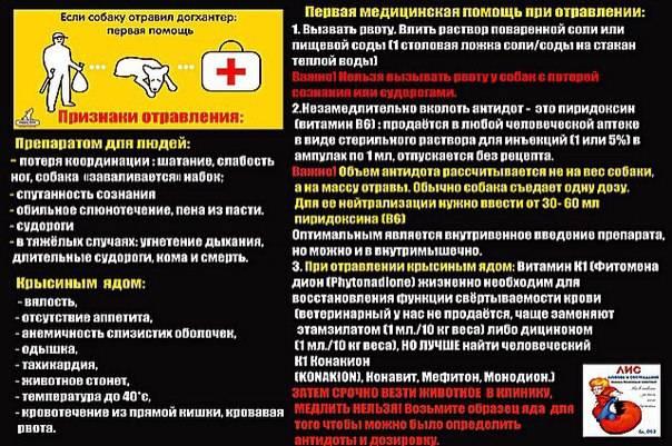 Признаки пищевого и химического отравления у собак. помощь и профилактика