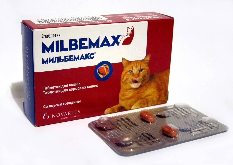 Таблетки от глистов для кошек - обзор лучших препаратов