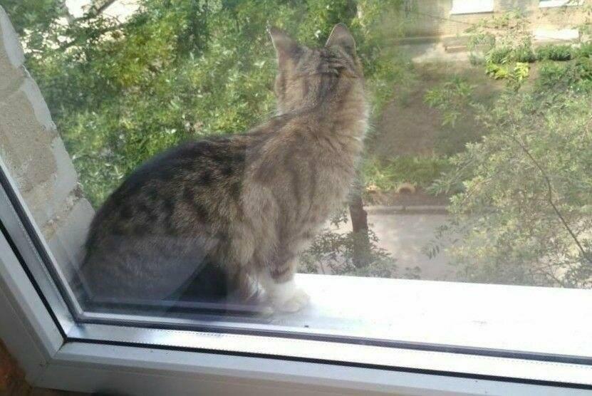 Трактовка примет о подобранных на улице кошках