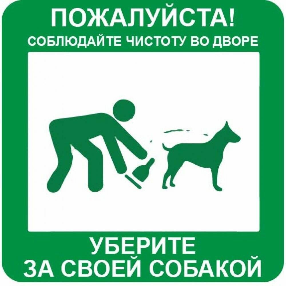 Какая ответственность предусмотрена за нарушение правил содержания собак и кошек?
