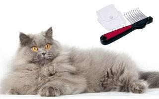Как правильно вычесывать кошку: уход за шерстью ?