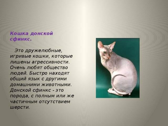 Донской сфинкс – описание породы, внешний вид, характер и повадки, уход и содержание, кормление