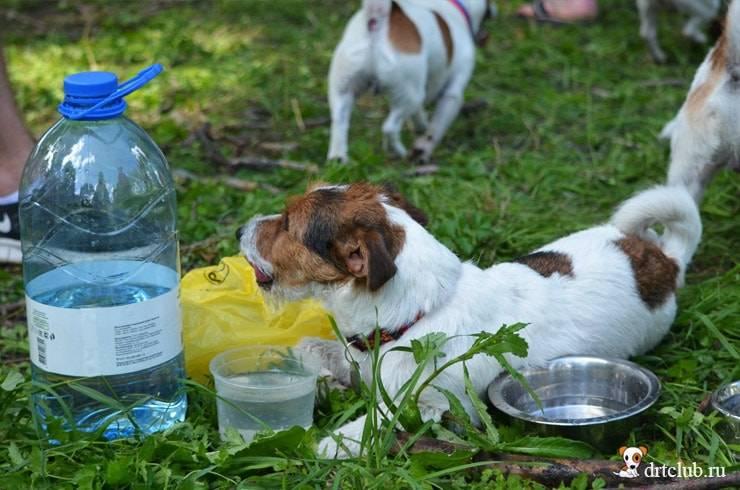 Основные причины, почему собака не пьет воду