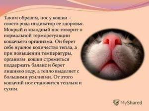 Сухой нос у собаки: причины и что делать