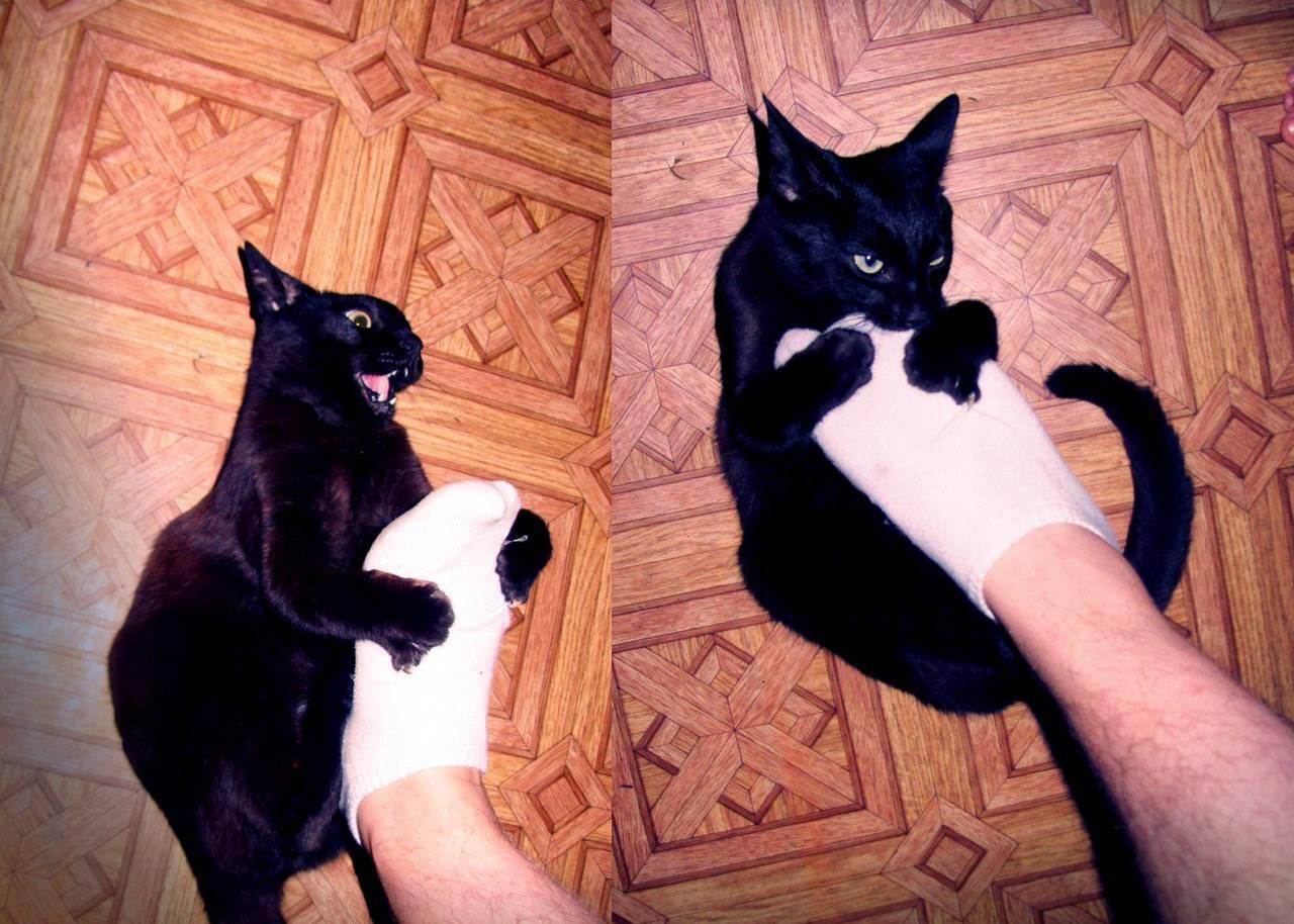 Почему кошка кусает за ноги хозяина и бросается на него