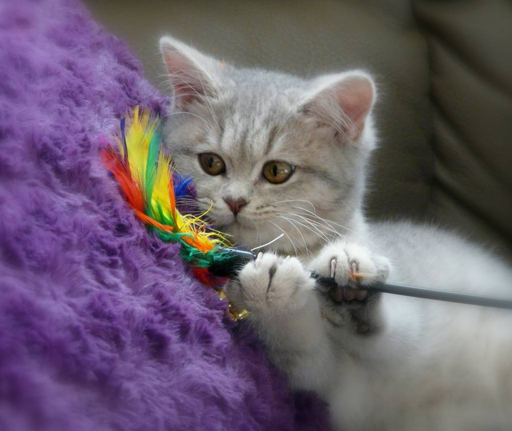 Игрушки для кошек: развивающие интеллектуальные изделия