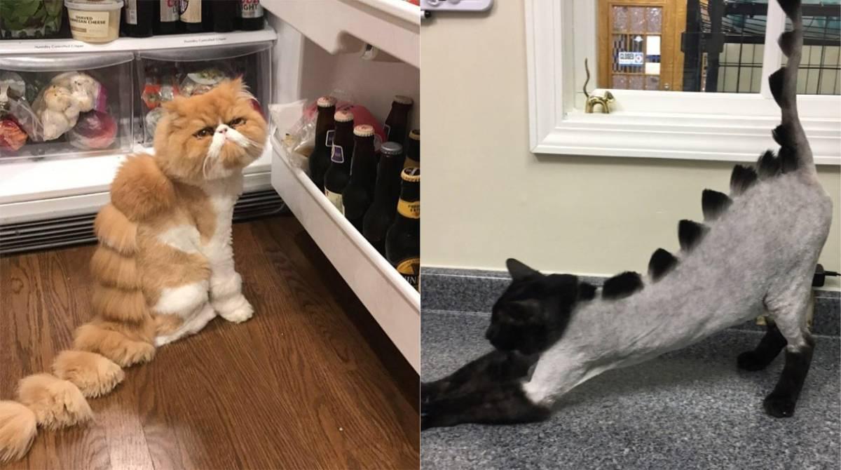 Как подстричь кота или кошку, если он не даётся в домашних условиях
