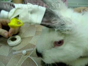 Понос у кроликов: лечение и профилактика заболеваний