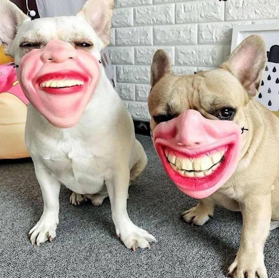 Смешные породы собак с фотографиями и названиями   petguru