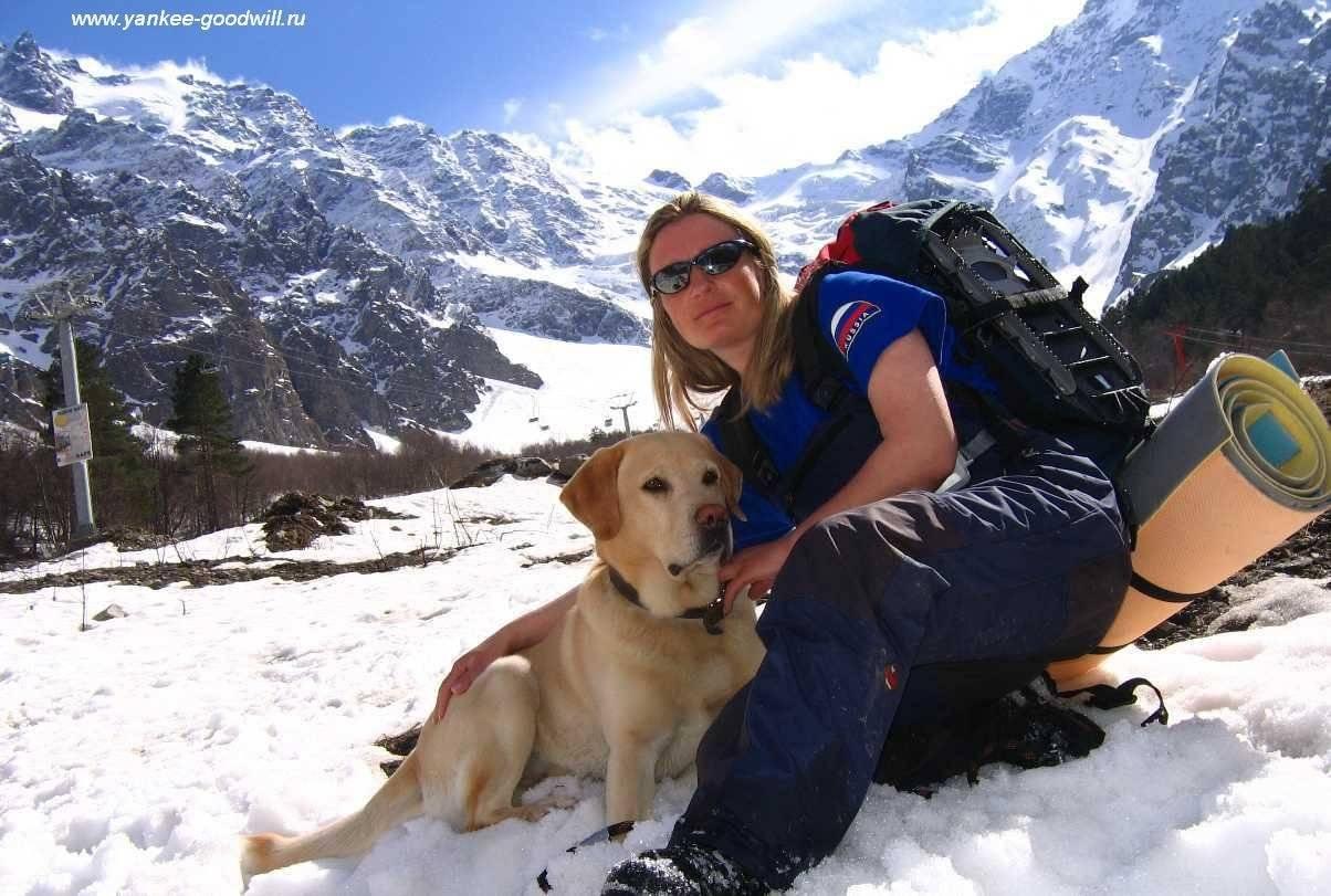 Собака спасатель. породы собак спасателей их описание, особенности и обучение