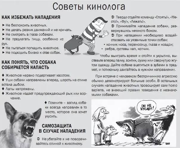 Если нападает собака: что делать?