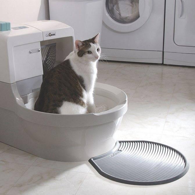 Проверенные способы отучить кошку гадить в неположенном месте