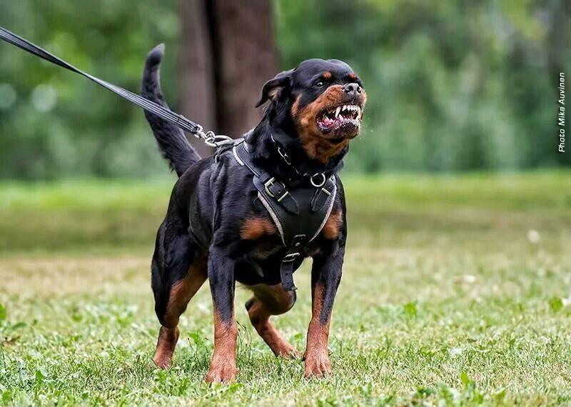 5 пород собак с обманчивой внешностью: они совсем не такие какими кажутся - досуг - животные на joinfo.ua