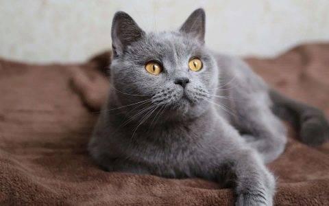 Имена для трехцветных кошек и котов