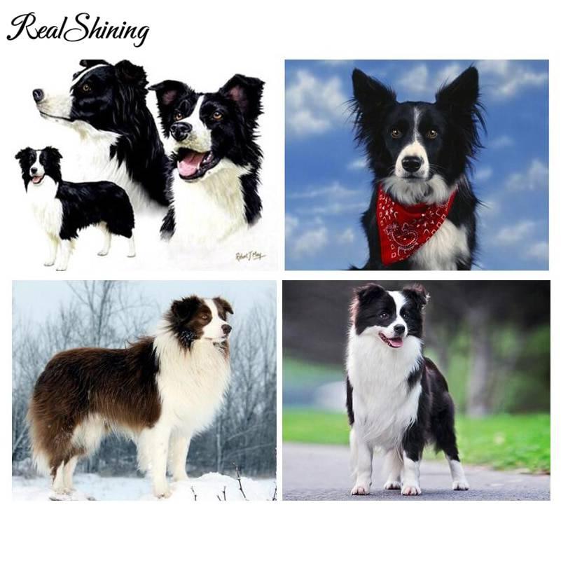 Характеристика собак породы бордер колли с отзывами и фото