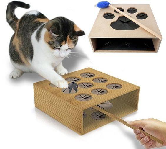 Интеллект кошек: проявление эмоций, особенности воспитания
