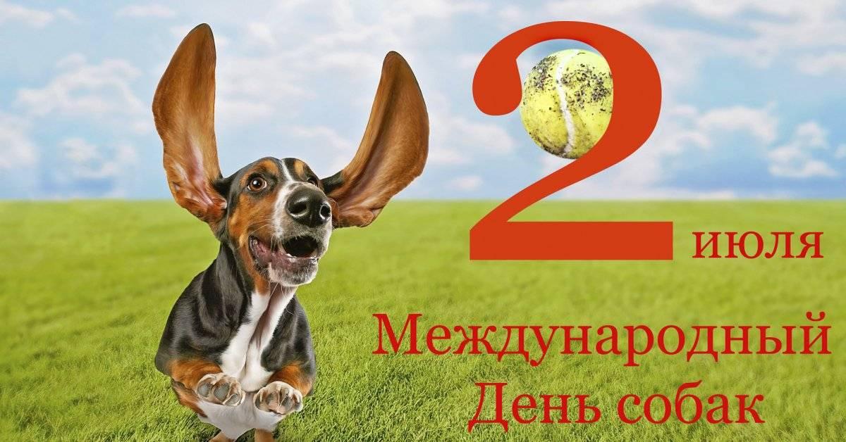 Всемирный день бездомных животных в 2019: какого числа отмечают, история праздника