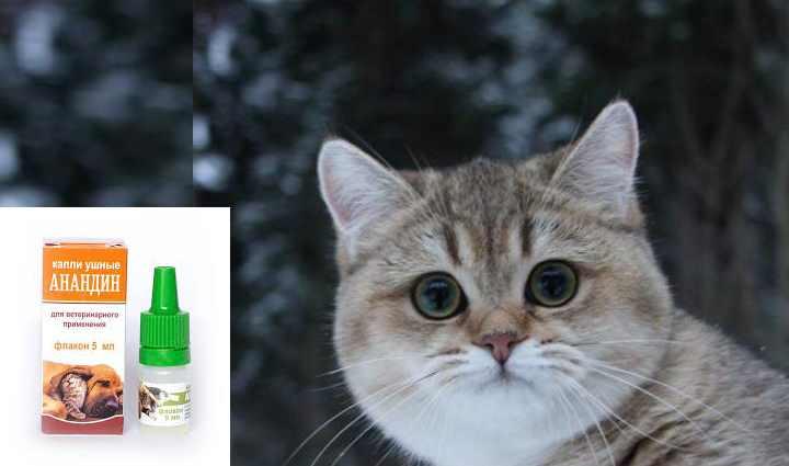 Что дать коту от насморка из таблеток. насморк у кошек: лечение в домашних условиях. если у кошки насморк, что делать владельцу - заболевания-мед