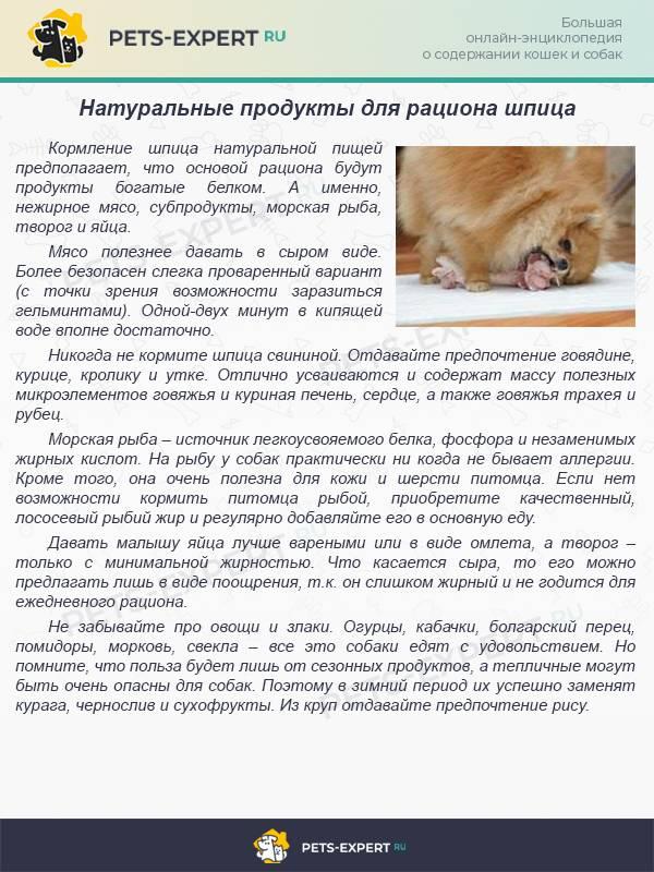 Основные правила и советы по уходу за месячными щенками без матери