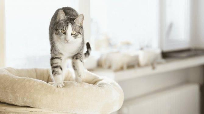 Любовь, феромоны и «молочный шаг» — зачем кошки топчут нас лапками?