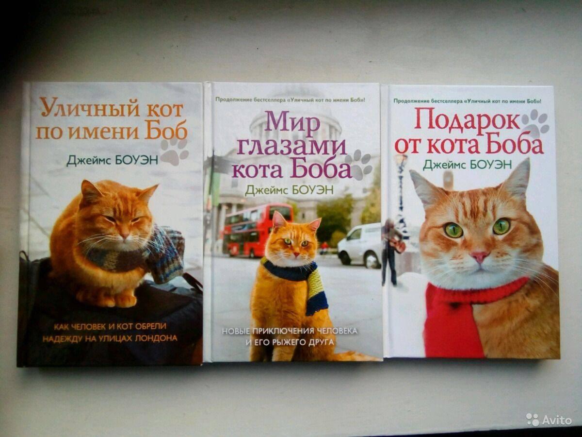 Что лучше кот или кошка в квартире? | в чем разница