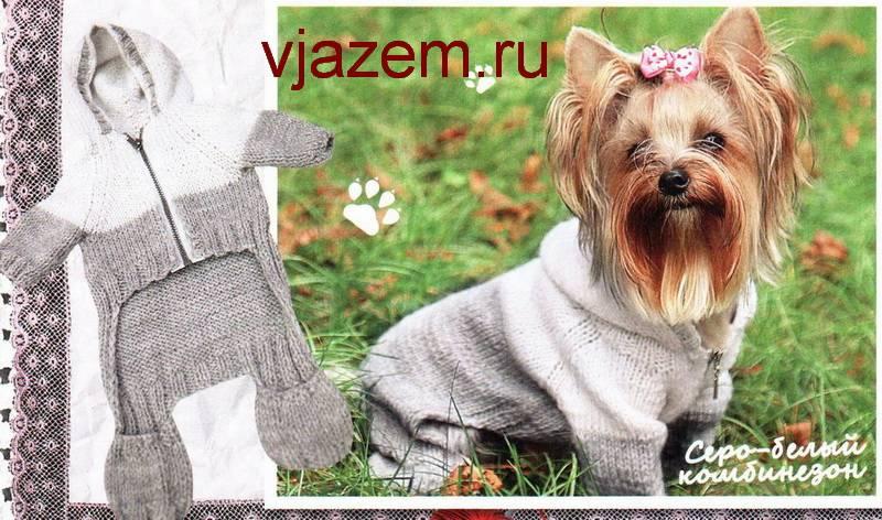 Как связать собаке свитер спицами (для начинающих): особенности вязания свитерка для собачки на спицах