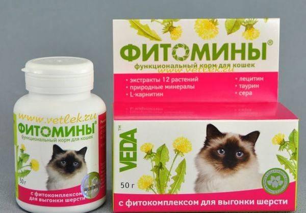 Выведение шерсти из желудков у кошек: действуем дома и самостоятельно