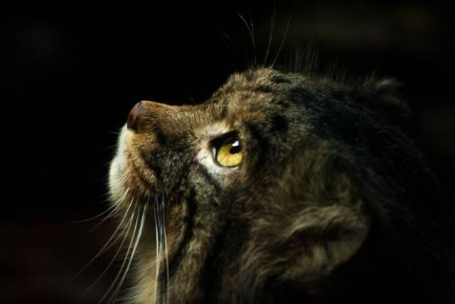 6 причин, почему кот или кошка прячется в темные места