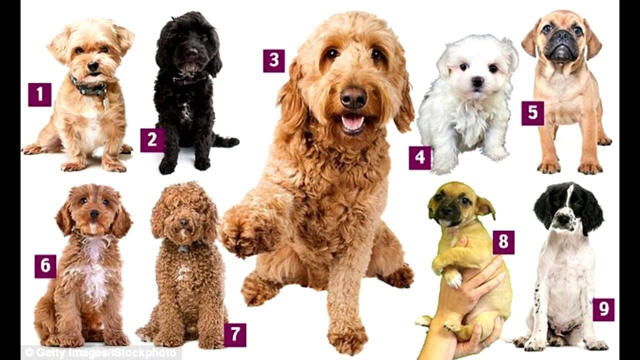 Самые популярные породы собак в этом году