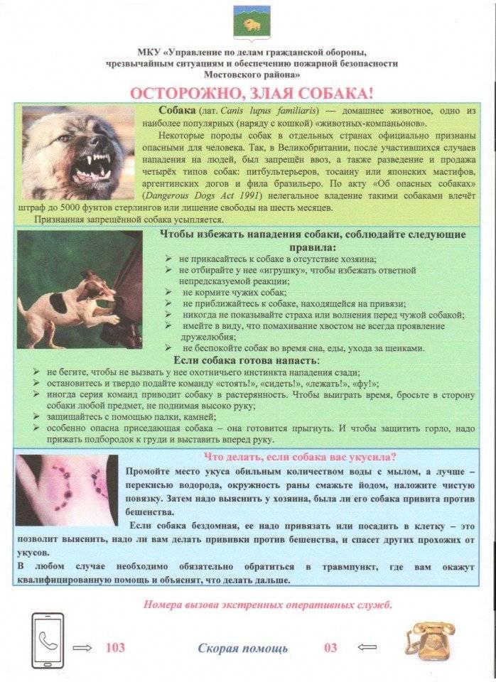 Что делать если укусила собака: лечение, симптомы бешенства, куда обращаться после укуса