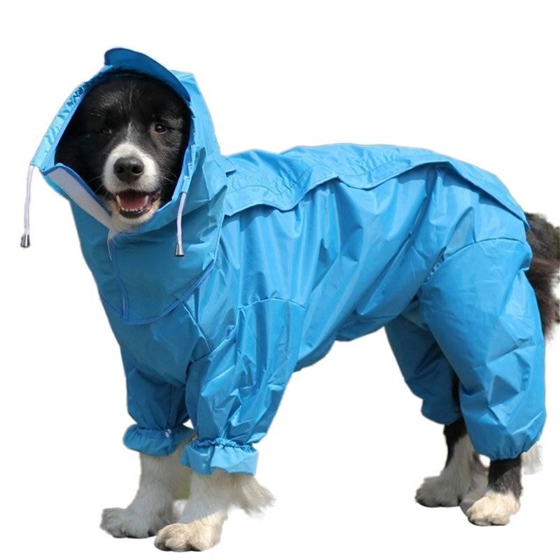 Выкройка дождевика для собаки своими руками: комбинезон с застёжкой по спине | категория статей на тему дождевик