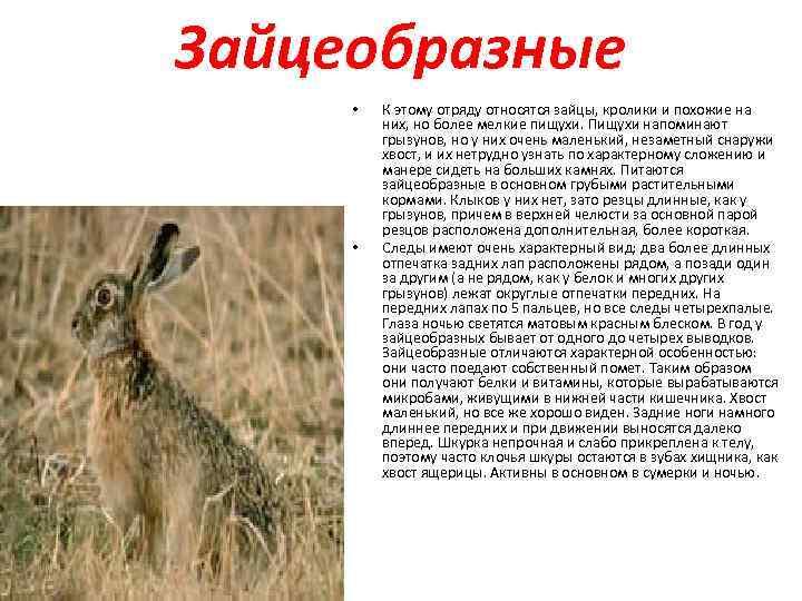Все об ангорских кроликах: интересные факты об английской и немецкой разновидностях
