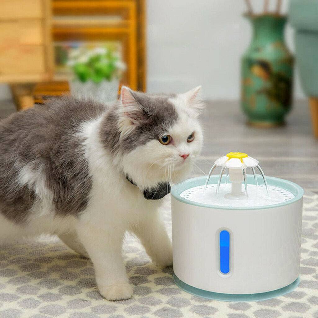 Фонтанчик для кошек: популярные модели и производители, сооружение поилки своими руками