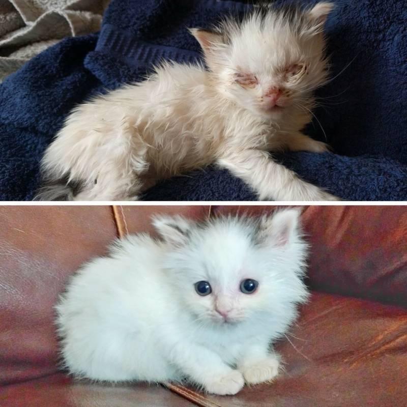 Куда деть новорожденных котят? способы пристроя котят, стерилизация кошки