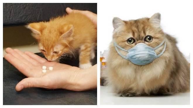 Насморк у кошек: лечение в домашних условиях насморк у кошек: лечение в домашних условиях