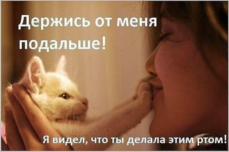 Стоит ли целовать домашнюю кошку