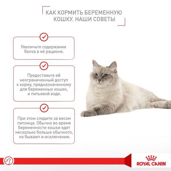 Можно ли беременным трогать кошек. почему беременным нельзя гладить кошек и собак