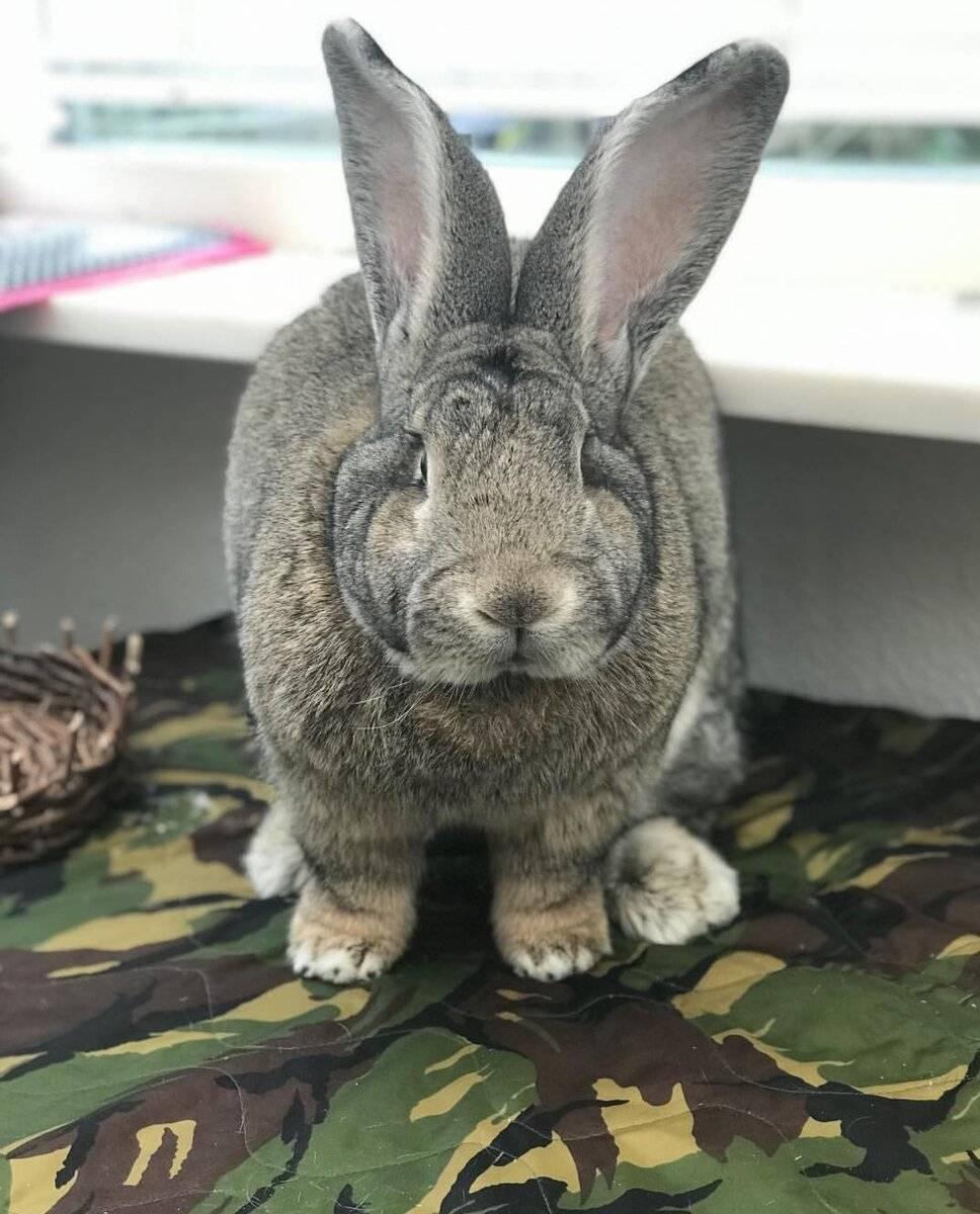 Какую породу декоративного кролика выбрать? — зверушки