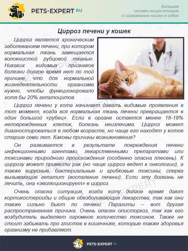 Болезни кошек: таблица симптомов с фотографиями, какие из них требуют лечения у ветеринара, чем может заразиться человек
